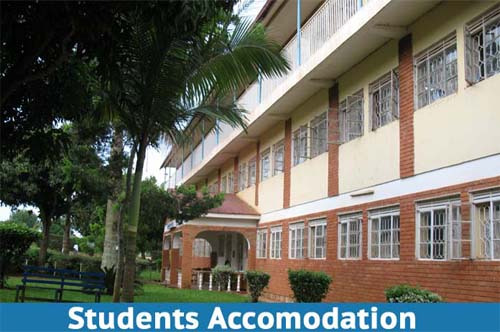 Nkumba University in search of a cat to hunt out rats in Nnabagereka hostel