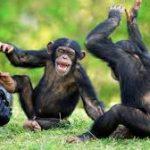 Director at Chimpanzee Sanctuary