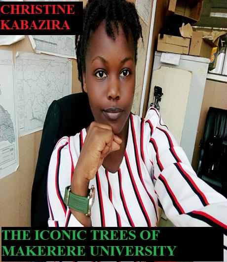 Iconic trees of Makerere University