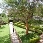 Depression at Makerere University